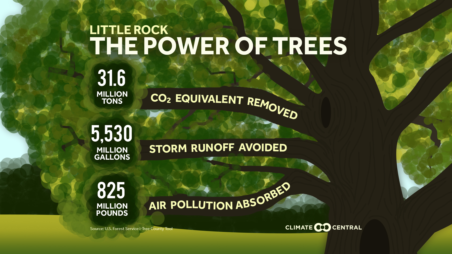 The Power Of Trees Climate Central